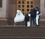 Под зданием Киевской государственной администрации посадили ждуна
