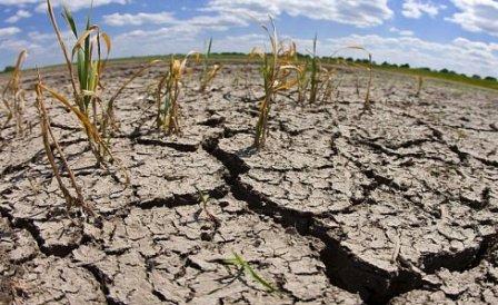 В Украине засухи и суховеи в ближайшие годы будут чаще