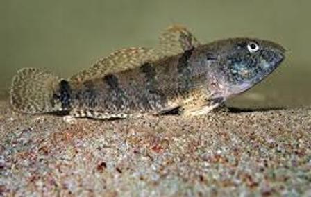 В Азовском море из-за потепления исчезает рыба