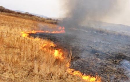Зеленский одобрил закон о запрете выжигания травы и лесов без штрафа