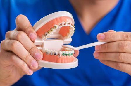 Японские ученые открыли способ выращивать новые зубы