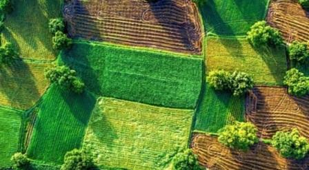 Кто с 1 июля получит право покупать землю в Украине