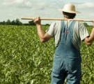 По решению КМУ, фермерам передадут 500 тысяч гектаров земли