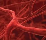 Ученые изобрели клетки, расширяющие кровеносные сосуды