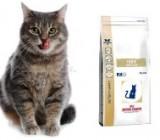 Специализированный кошачий корм для устранения проблем с пищеварением
