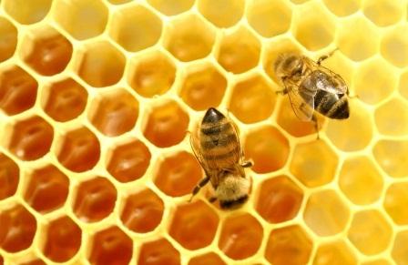 Массовый падеж пчел: цены в Украине на мед будут расти